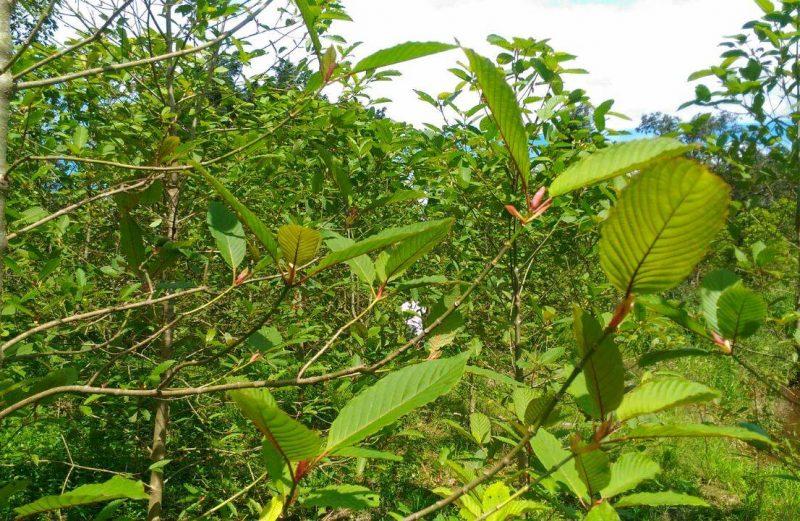 Photos from the Kratom Farm Where We Source Brave Botanicals Kratom